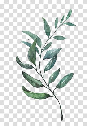 Aquarelle Dessin Dessin Gravure À La Feuille, Aquarelle Feuilles, Plante À Feuilles Vertes png