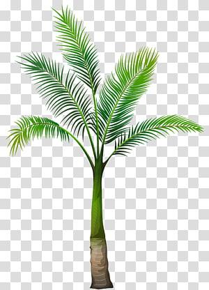 Palmiers, palmier, illustration de l'arbre vert png