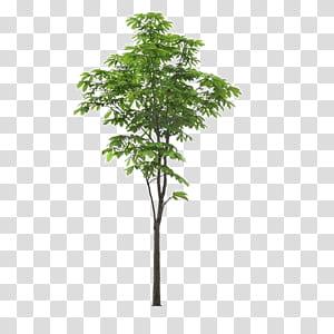 Arbre de paysage, Arbre de premier plan de paysage, arbre à feuilles vertes sur fond bleu png