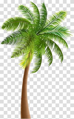illustration d'arbre de noix de coco vert, Arecaceae Tree Noix de coco, palmier png