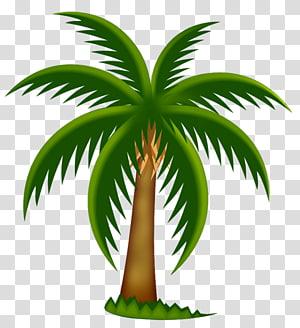Palmiers dattiers, illustration de palmier peint, vert et bcoconut png