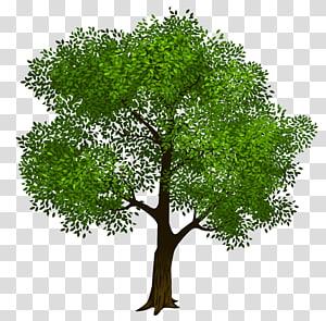 Tree, Green Tree, illustration d'arbre brun et vert png