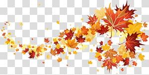 illustration de feuilles d'érable, automne, feuilles d'automne png