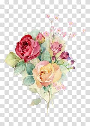 Roses Centifolia Roses de jardin Design floral Bouquet de fleurs Fleurs coupées, fleurs aquarelles, fleurs pétales roses et jaunes png