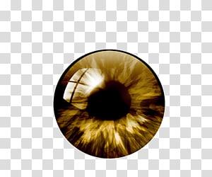 art des yeux bruns et noirs, couleur des pupilles, œil humain png