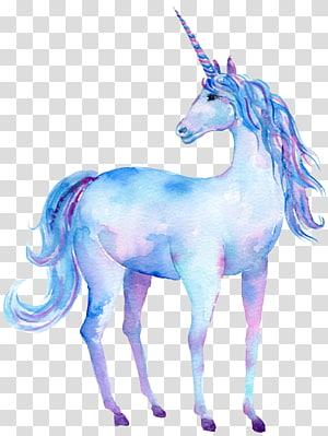 illustration de licorne blanche, bleue et rose, peinture à l'aquarelle Art de la licorne, licorne png
