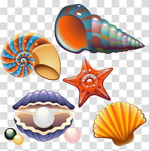 illustration de coquillages de couleurs variées, coquillages, coquillages nautilidés, coquillages et classe créative png