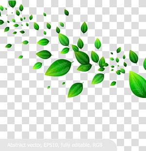 Feuille, quand frais, vert, matériel, vert, feuilles, illustration png