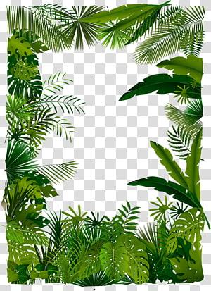 Illustration de la forêt tropicale arbre euclidien, arbres, illustration d'un cadre de feuilles png