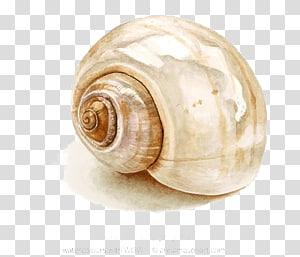 illustration d'escargot brun, peinture aquarelle dessin coquillage, conque png