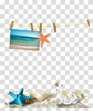 illustration d'étoile de mer, modèle Web Sandy Beach Seashell, matériel de décoration d'étoile de mer png
