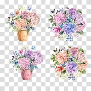 Hydrangea petiolaris Flower Blossom Illustration, bouquet de fleurs en pot, illustration de fleurs pétales assorties png