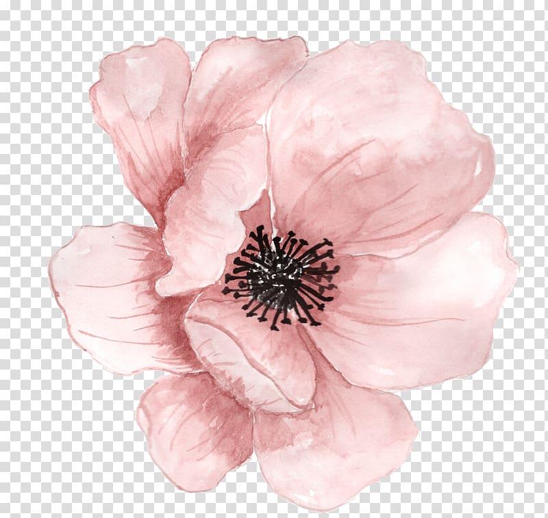 Fleur Peinture à l'aquarelle, fleurs peintes à la main rose, fleur rose png