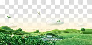 rivière entre champs d'herbe, thé vert, grandes étendues de thé vert png