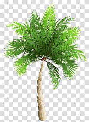 Palmiers dattiers Phoenix canariensis Noix de coco, palmier, oeuvre de palmier vert png