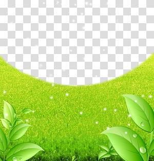 Green Lawn Fundal, matériel de fond vert à vert png