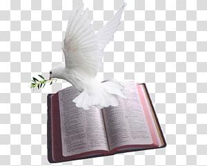 Colombe blanche sur l'illustration de la page du livre gris, chapitres et versets de la Bible Psaumes Colombes comme symboles Dieu, sainte bible png