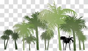illustration de cocotiers, groupe de palmiers png