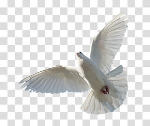 colombe blanche, Saint-Esprit Bible Trinité Dieu, Dieu png