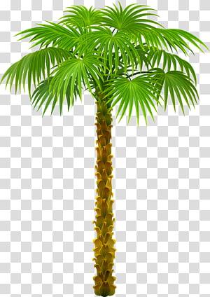 Palmiers, palmier, illustration de plante de palmier vert png