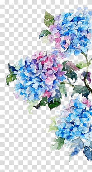 Aquarelle Dessin De Fleurs, Aquarelles Fleurs, Peinture De Fleurs Bleus Et Rose png