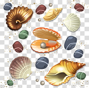 Seashell Conch Scalable Graphics, conch png