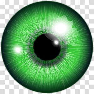 Illustration de globe oculaire vert, œil humain Couleur d'iris vert, œil png