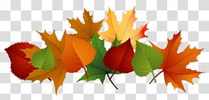 Couleur des feuilles d'automne, feuilles d'automne, illustration de feuilles d'érable brun et vert png