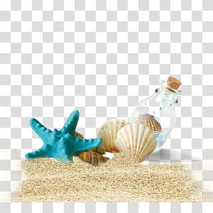poisson étoile bleue, bouteille de plage Shell, coquille de conque png
