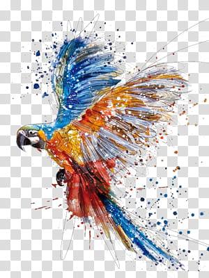 Aquarelle Dessin Illustration, éclaboussures d'oiseaux perroquet à la main, peinture ara png