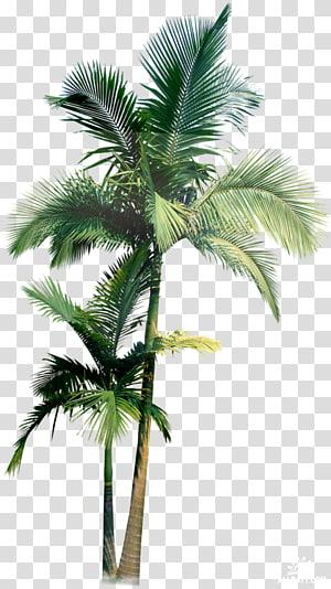 Deux palmiers verts, Arecaceae Palmier, Flyer fête de Pâques png