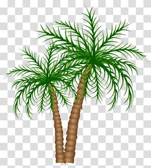 illustration d'arbre de noix de coco, palmier asiatique palmyre Texte branche feuille de palmier dattier, palmiers png