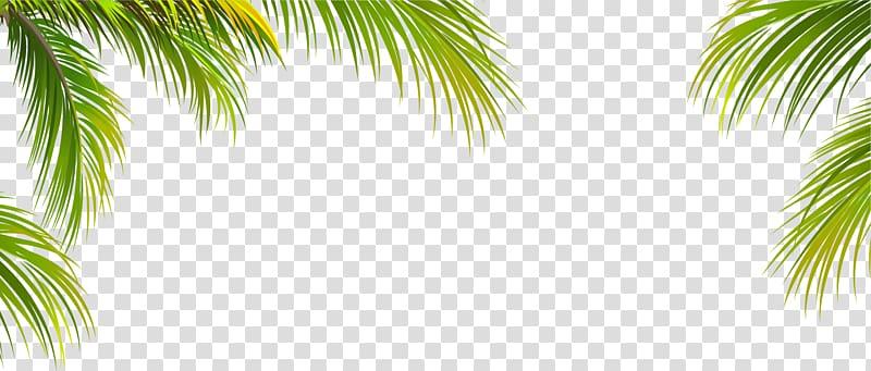 Feuille d'arbre de noix de coco, texture de bordure de feuille de noix de coco verte, illustration d'arbre palmier png