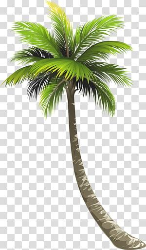 palmier, Ernakulam Royal Palm Beach Arecaceae Lake Worth Noix de coco, cocotier png