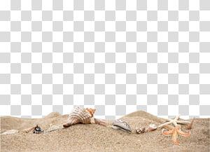 Curriculum vitae Format de fichier de document Icône, sable de plage, coquillages et étoiles de mer sur le littoral png