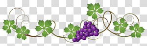 illustration de raisin pourpre, conception graphique de jus de vigne raisin commun, vignes png