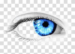 illustration de l'oeil bleu, couleur des yeux, oeil png
