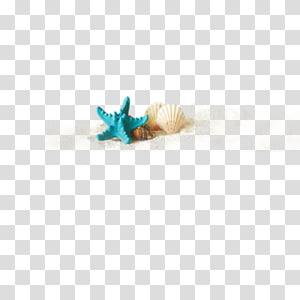 étoile de mer et deux coquillages, coquillage, coquillages et éléments marins d'étoile de mer png