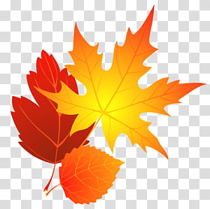 Feuilles d'automne, feuilles d'érable brunes png