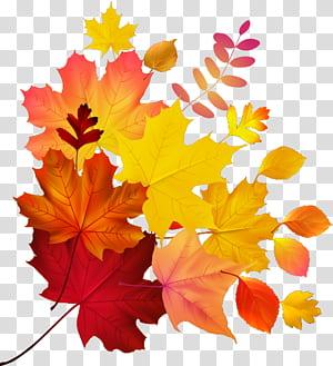 Couleur des feuilles d'automne Feuille d'érable, feuille d'érable, feuilles d'érable png