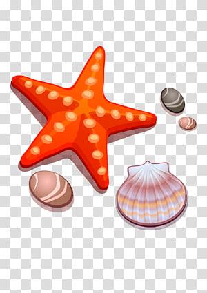 étoiles de mer et coquille de palourde illustration, dessin dessin animé étoile de mer coquillage, coquillages et étoiles de mer png