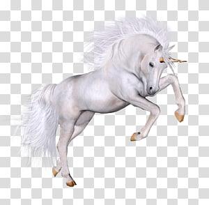 Licorne blanche, Licorne, Licorne png