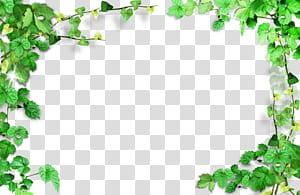 Vert, cadre de feuilles vertes, cadre de la plante, textile vert png