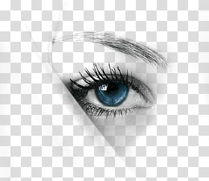 Cils iPhone X Beauty Woman, yeux bleus, oeil humain png