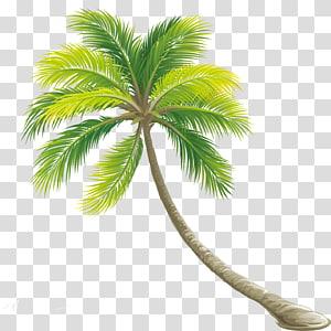 cocotier vert, arbuste de couleur, palmier png