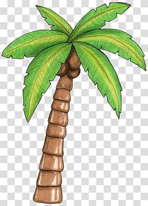 cocotier, arbre Arecaceae, moana png