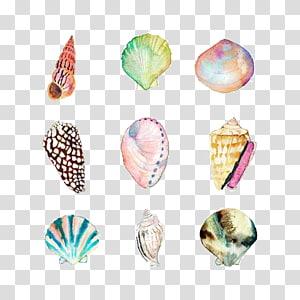 Art de neuf coquillages de couleurs assorties, peinture à l'aquarelle Seashell Drawing Beach Illustration, shell png