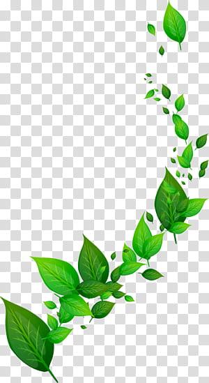 Feuille dynamique, illustration à feuilles vertes png