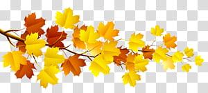 Branche arbre automne, branche avec feuilles d'automne, branche d'érable jaune et brune png