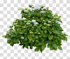 plante verte, brouette plante pot de fleurs récipient matériel de jardin, buisson png